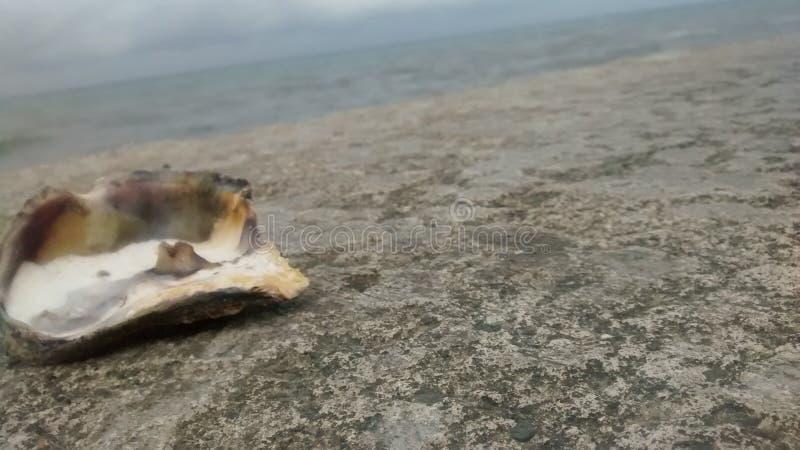 shell over de horizon stock foto's