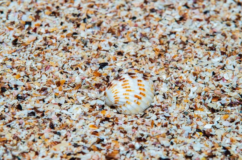 Shell over little pieces of shells in a tropical beach. Tropic image showing a shell over sand made of shells stock photography