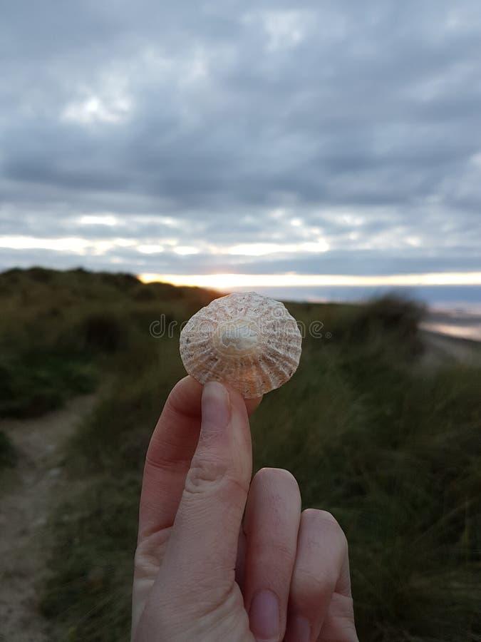 Shell over zonsondergang stock fotografie