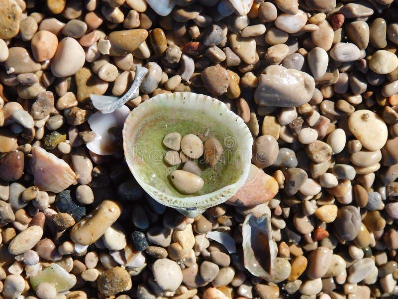 Shell på de lilla stenarna arkivbild