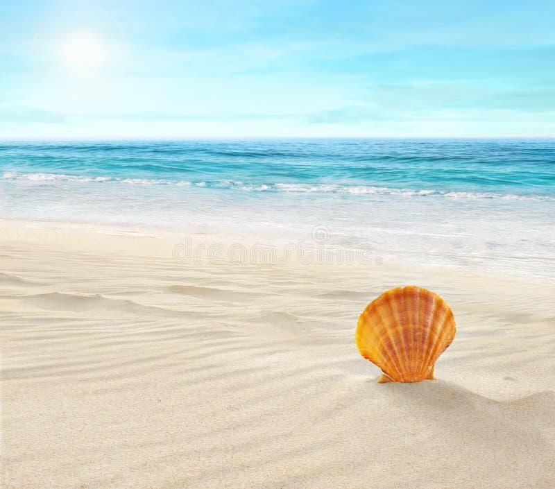 Shell på den tropiska stranden royaltyfri fotografi