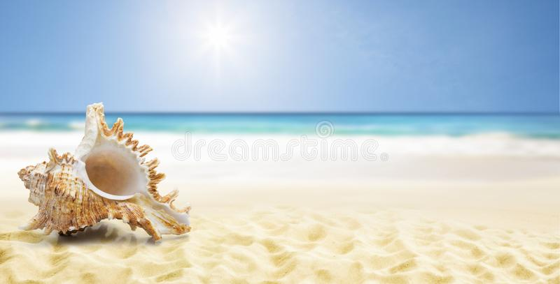 Shell på en strand royaltyfria bilder