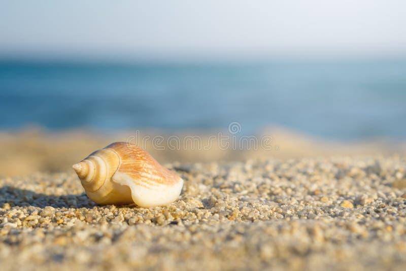 Shell på sand på stranden Blått hav på bakgrund royaltyfria bilder