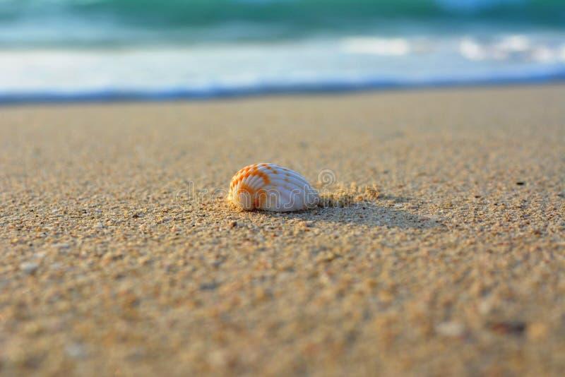 Shell på sanden av havskusten royaltyfri foto