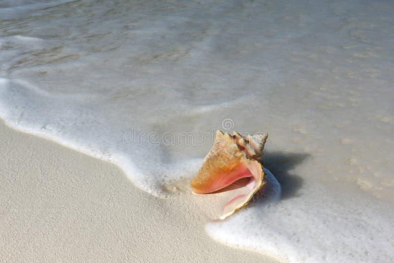 Shell på sandstranden royaltyfri fotografi