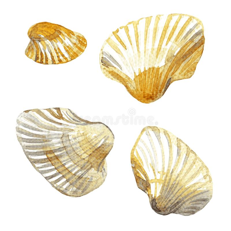 Shell painted watercolor stock image