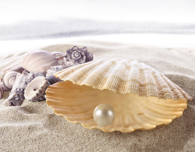 Shell with a pearl royalty free stock photos