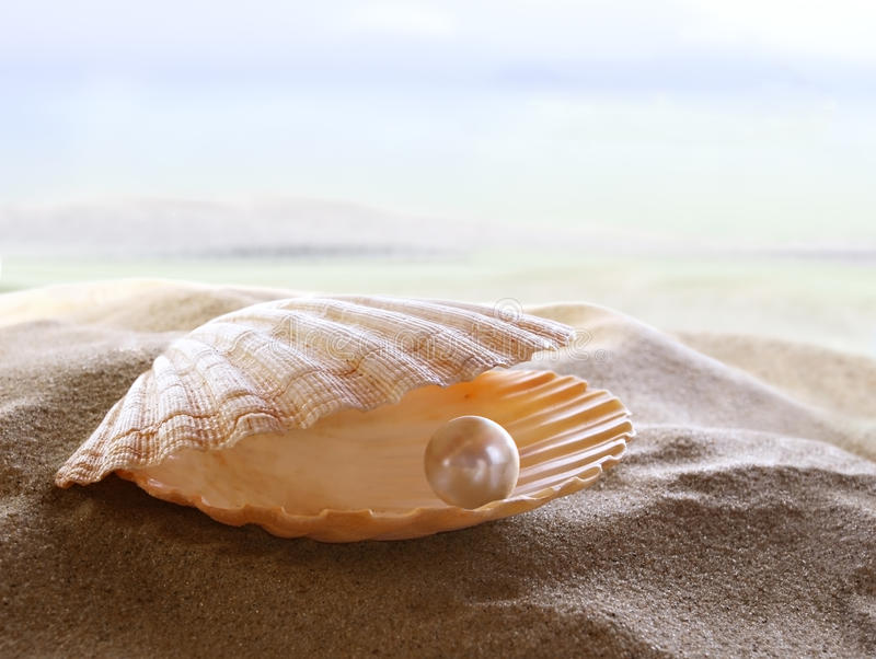 Shell with a pearl. An open sea shell with a pearl inside stock photo