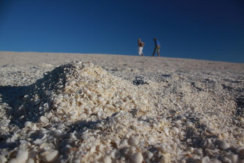 Shell pla?a, rekin zatoka, zachodnia australia obraz royalty free