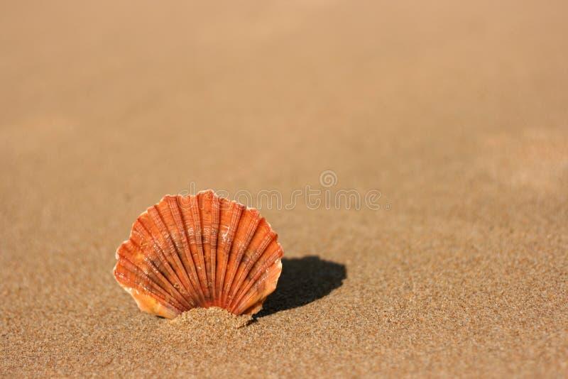 Shell plano del mar en la arena fotografía de archivo libre de regalías