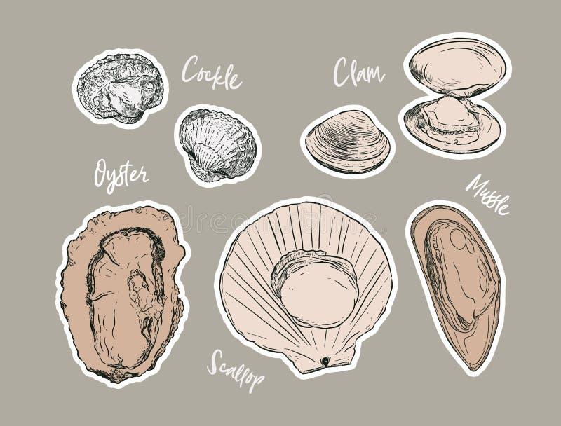Shell, ręka remisu nakreślenia wektor Owoce morza set ilustracja wektor