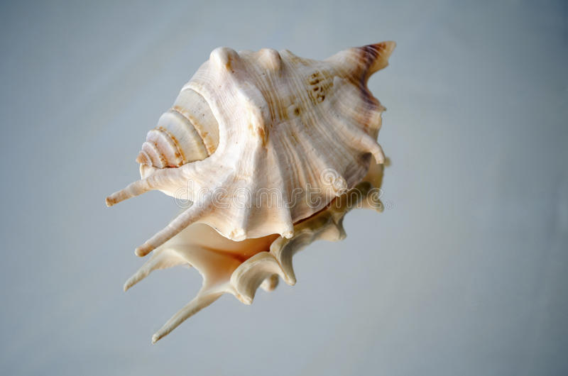 Download Shell On Reflective Surface Stock Image - Image of snail, ecology: 42981963