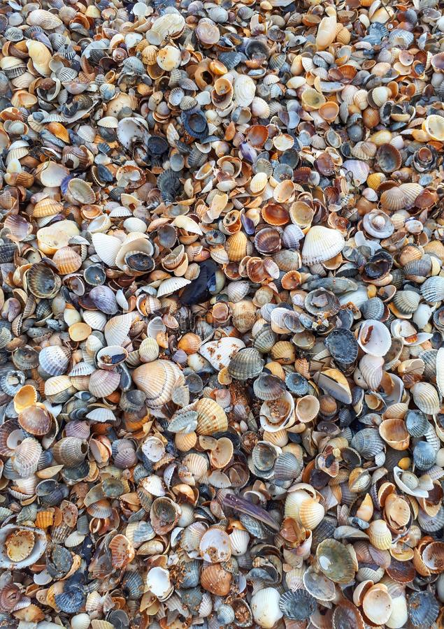 Shell rock texture  beach shells. Shell rock shells beach texture royalty free stock images