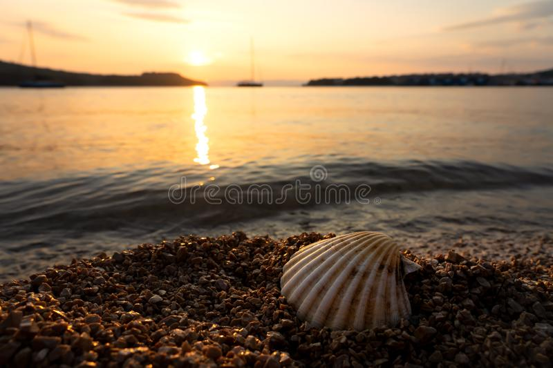 Shell on the rocky beach at sunset in Croatia.  stock photo
