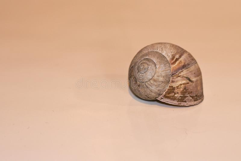 The shell of a roman snail royalty free stock image
