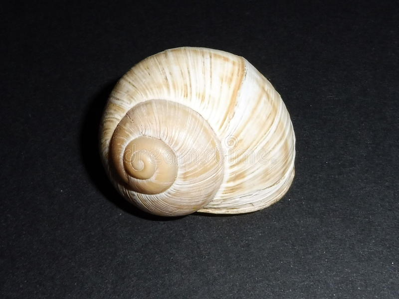 The shell stock images