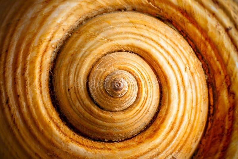 Shell Ruszać się po spirali zdjęcia royalty free
