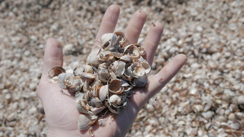 Shell`s stock photography