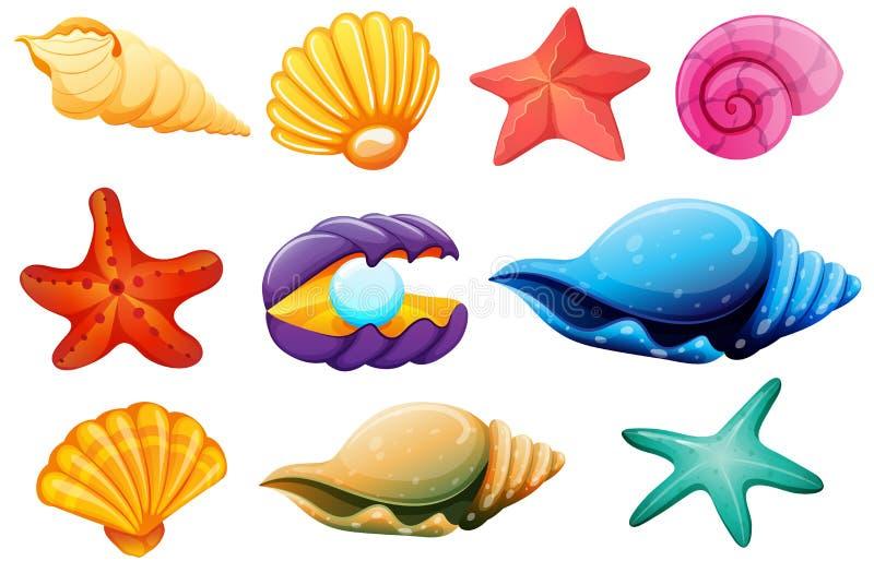Shell samling stock illustrationer
