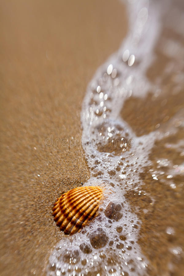 Shell in the sand royalty free stock photography
