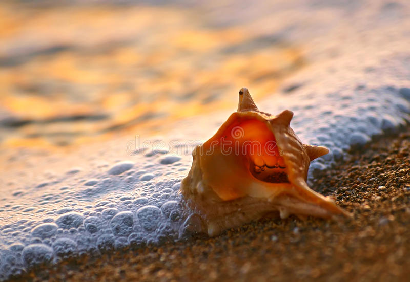 Shell on sand beach stock photos