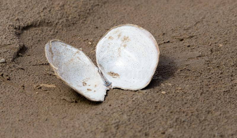 Shell in the sand on the lake royalty free stock photography