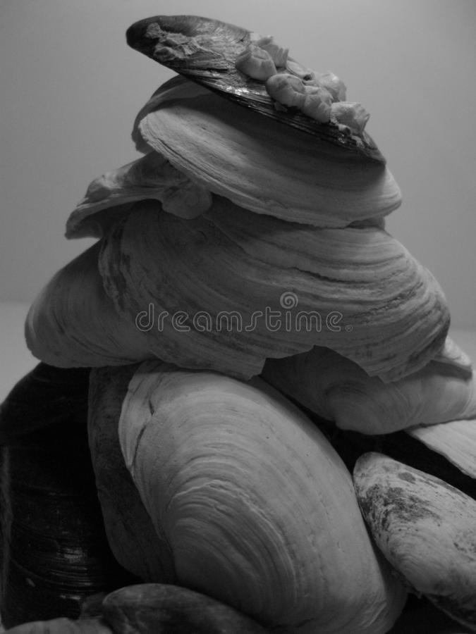 Shell sculpture. Natural abstraction. Marine sediments. Sea life royalty free stock photography