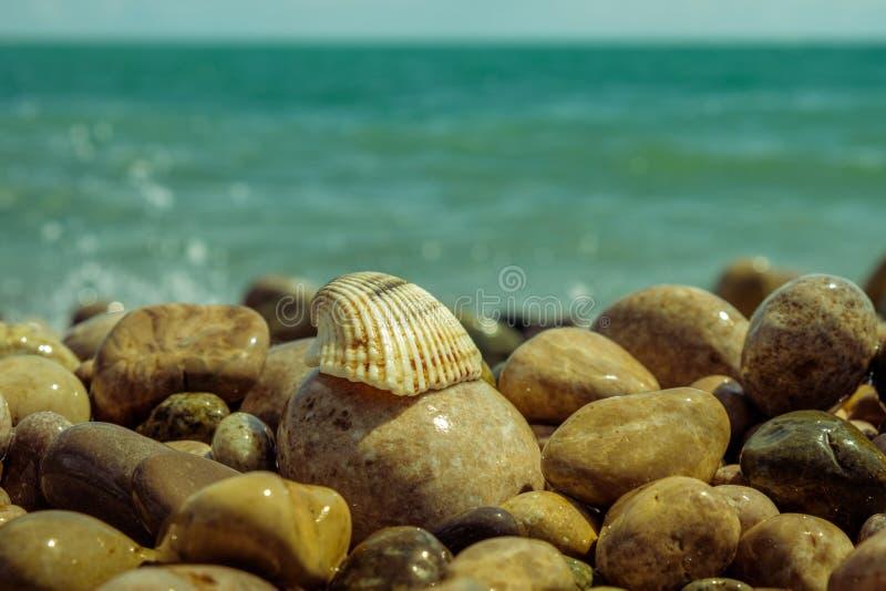 Shell se situant dans les roches sur la plage images libres de droits