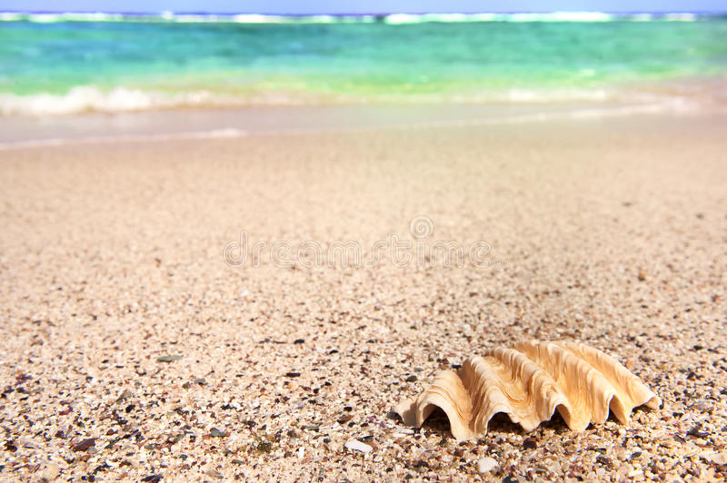 Download Shell and sea stock image. Image of nature, beach, detail - 16869407