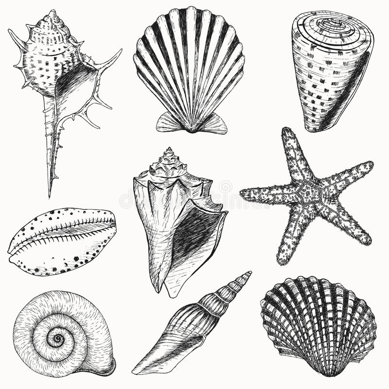 Free Shell Set Royalty Free Stock Photography - 30215287