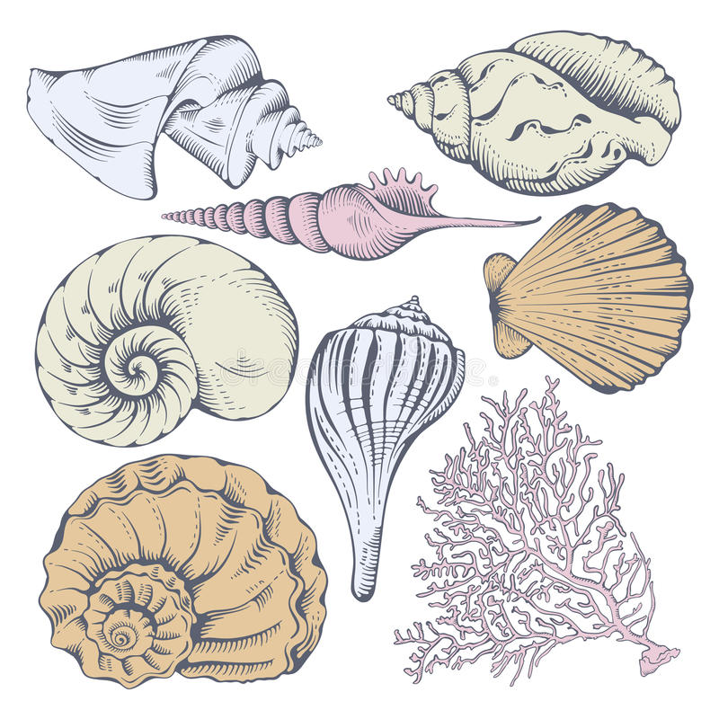 Shell set. Vintage hand drawn collection of various seashell and coral. Isolated on white background. Vector illustration royalty free illustration