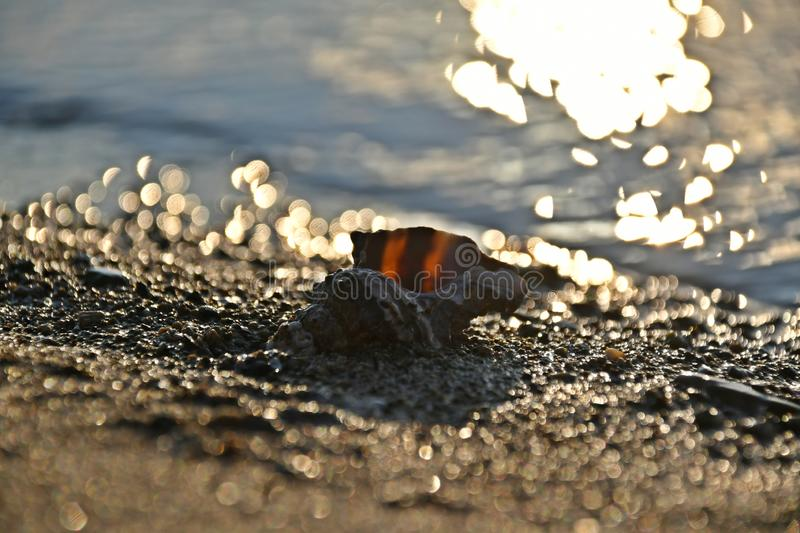 Shell on the shoreline between the reflections that fall on the grains of sand stock photography