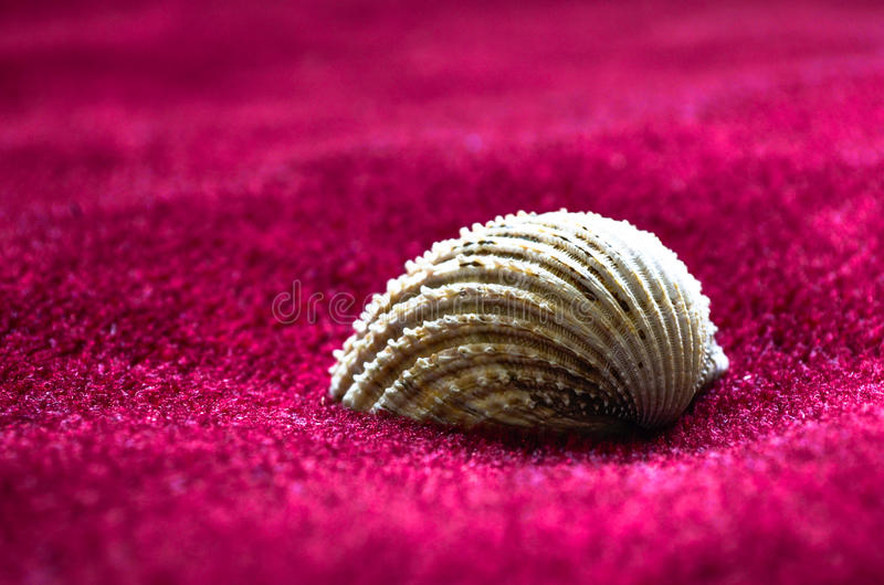 Shell on a soft crimson cushion. Being creative using objects around the house for household decoration royalty free stock image