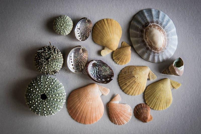Shell sortidos de Nova Zelândia imagens de stock