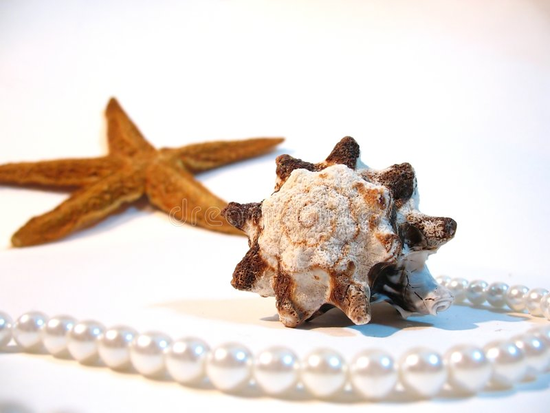 Shell, star, pearls royalty free stock image