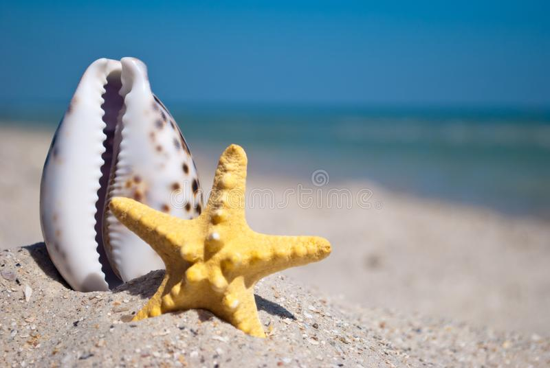 Shell and starfish lie on the sand on a background of blue sea and blue sky summer vacation stock photo