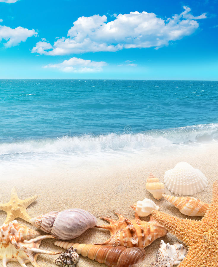 Shell and starfish on sandy beach stock photography
