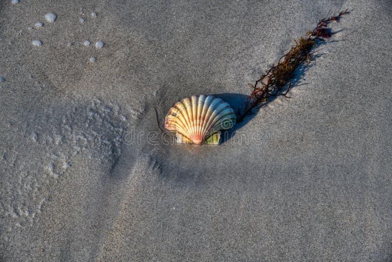 Shell am Strand lizenzfreie stockfotos