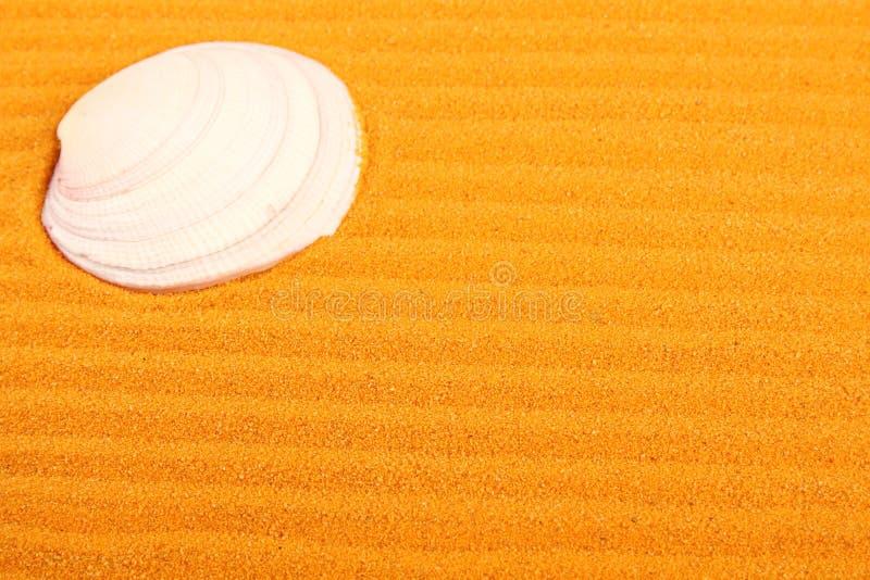 Shell su un giallo sabbia fotografia stock