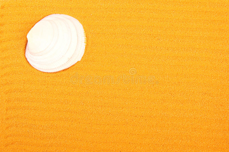Shell su un giallo sabbia fotografia stock libera da diritti