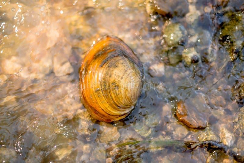 Shell sul fiume puntella fotografie stock libere da diritti