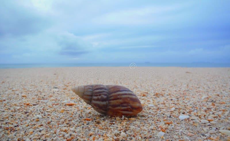 Shell sulla spiaggia fotografie stock libere da diritti