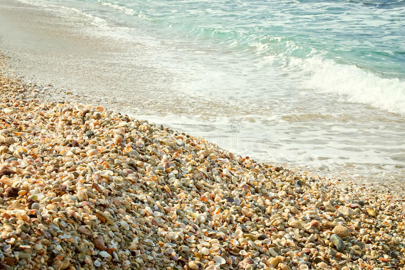 Shell sulla spiaggia con le onde, stile d'annata. immagini stock