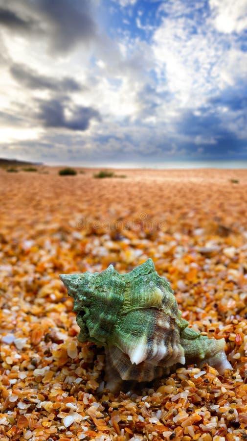 Shell sulla spiaggia di sabbia fotografia stock