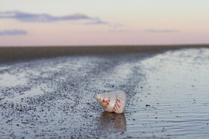 The shell and sunset. stock images