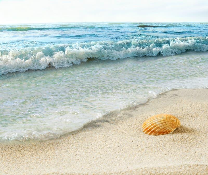 Shell sur la plage images libres de droits