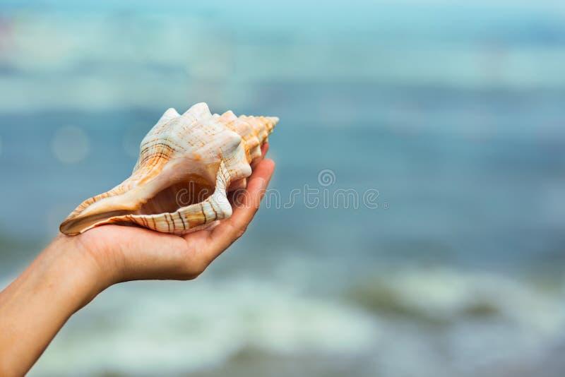 Shell sur la plage image stock