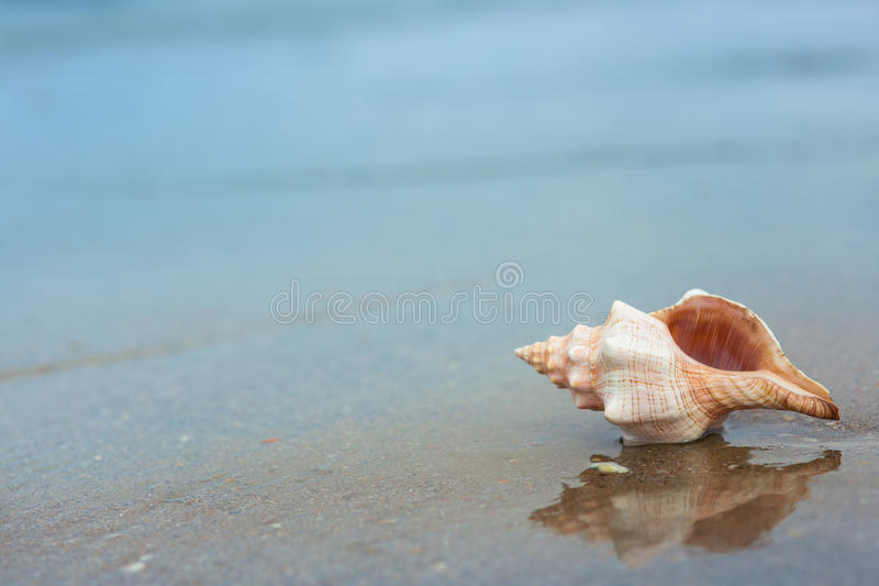 Shell sur la plage photo libre de droits