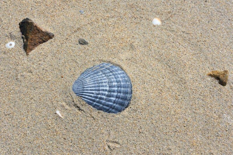 Shell sur le sable photos stock