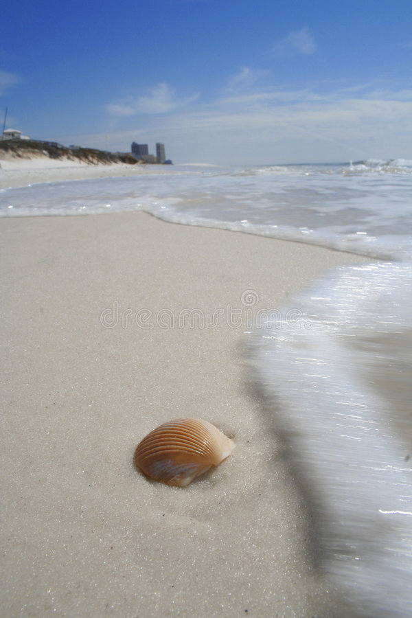 Shell surf stock photography
